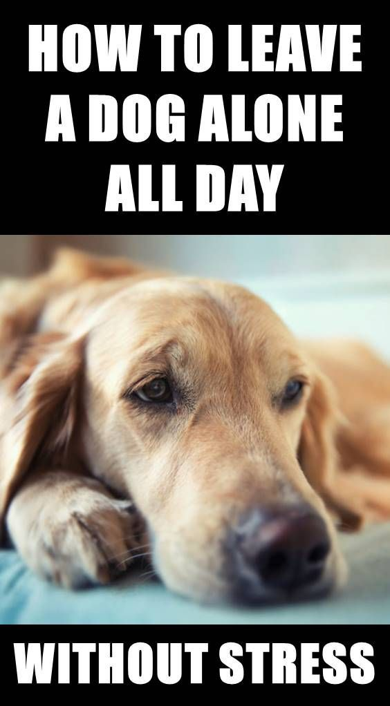 How To Leave Your Dog Happy Home Alone All Day Dogbraintraining