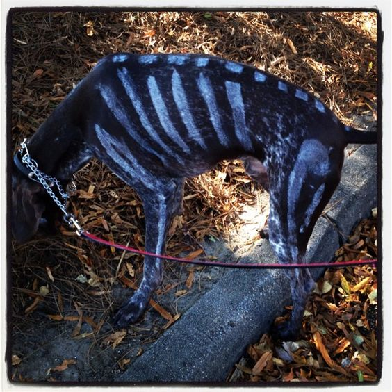 """""""Skelton puppy!!!! Come see this guy at @downbythetracks Dogs, Beer, #foodtrucks Benefits the @wakecountyspca Pets allowed!!! #dogs #dogsofinstagram"""" www.shoplocalraleigh.org"""