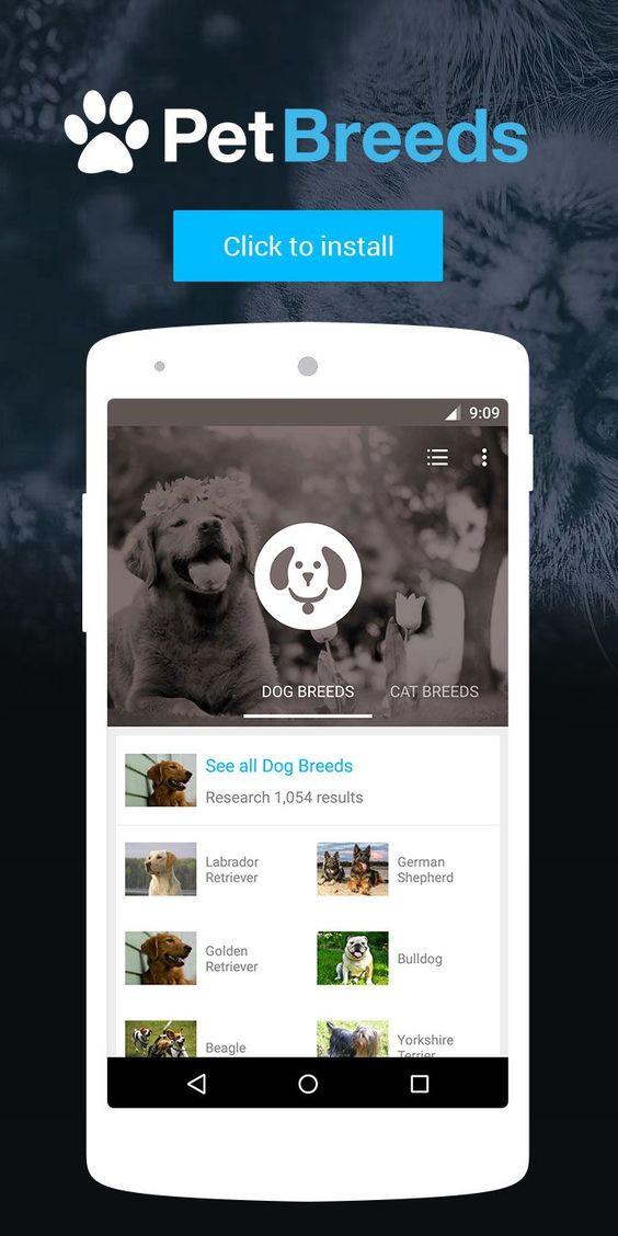 25 Longest-Living Dogs