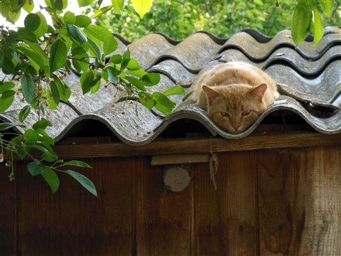 un toit bien calibré