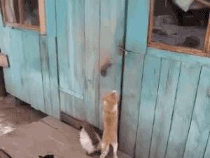 Animais são inteligentes demais