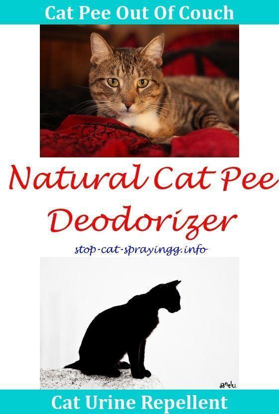 8 Nurturing Clever Hacks Carpet Cleaning Van Rugs Carpet Cleaning Hacks Simple Carpet Cleaning Machine Simple Ca Cat Spray Smell Cat Spray Flea Spray For Cats