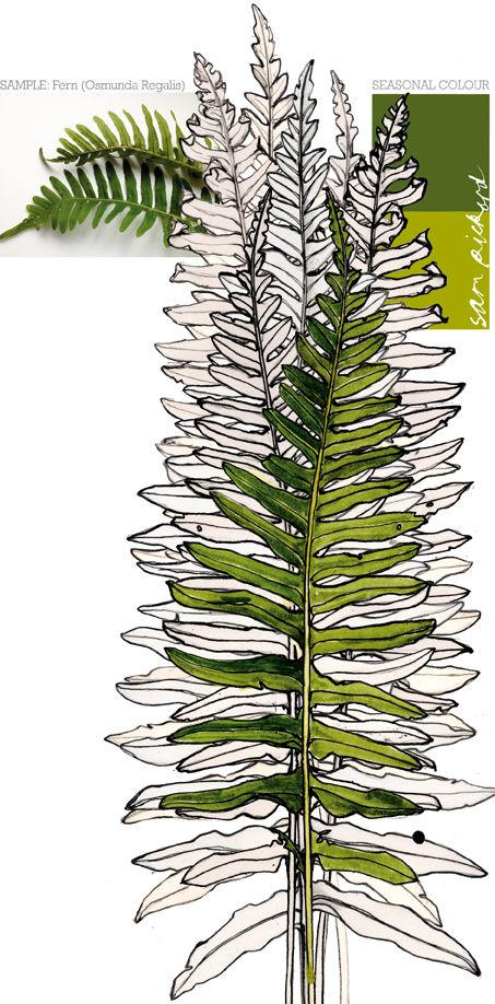 how to draw a fern plant