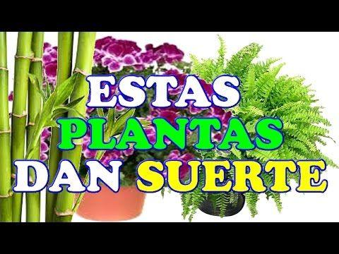 Estas 8 Plantas Ayudan A Atraer Dinero A Tu Casa O Negocio Helechos A Plantas De Buena Suerte Planta De La Suerte Plantas De Bambú