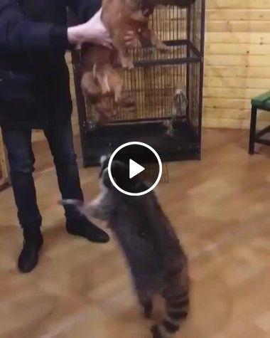 Solta esse cachorro cara, eu também quero seu colo!