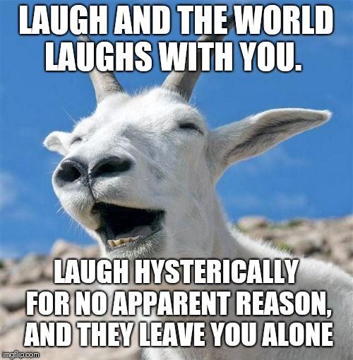 Laughing Goat Husband Humor Happy Birthday Husband Funny Husband Meme