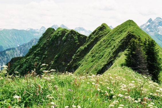 Bavaria, Oberstdorf. NSG Schlappoltkopf, Söllerköpfe