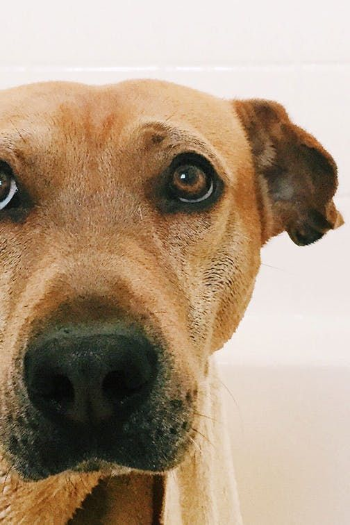 Dogs Have Their Own Showers Now And We Really Want One In Our House Purewow News Trends Pet Dogs Home Bathroom Dogs Pets Animal Room