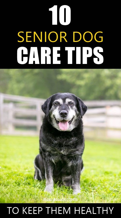 10 Senior Dog Care Tips In 2020 Senior Dogs Care Dog Care Senior Dog