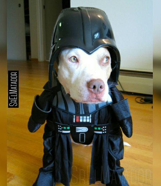De repente te encontrás a Dog Vader. #DarthVader #StarWars #BB8 #perro #Mascota #dog #disfraz #costume #SrElMatador #ElSalvador #SV #SrElMatador http://www.srelmatador.com #Foto