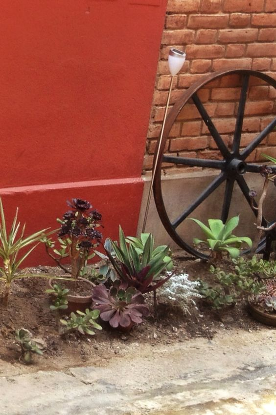 Jardín con suculentas