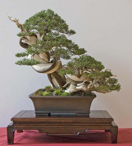 Bonsai, Bäume and Lehrer on Pinterest