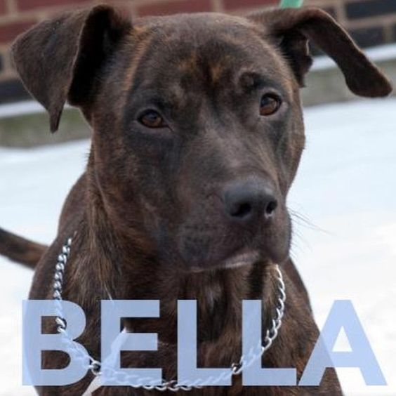 Bella is a 2 yr old terrier/pit bull/hound mix. She is friendly & affectionate. Meet her at 184 Verona St.