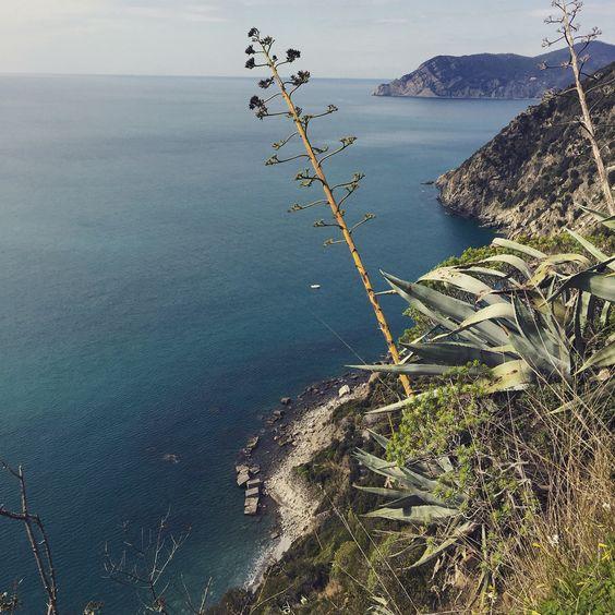 Cinque Terre Coastline -hiking trail
