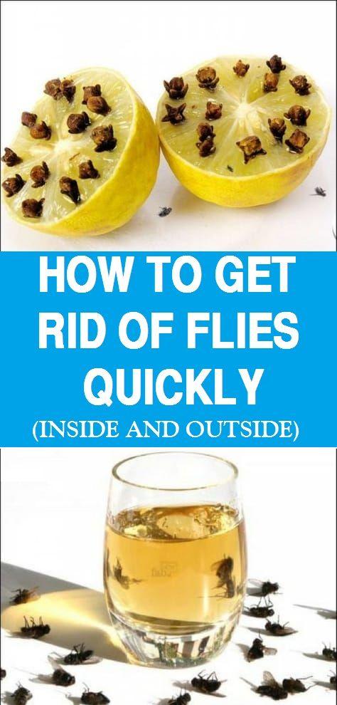 f0f7f873cca10aa5b58b34e2ce5008cd - How To Get Rid Of Fruit Flies In Garage