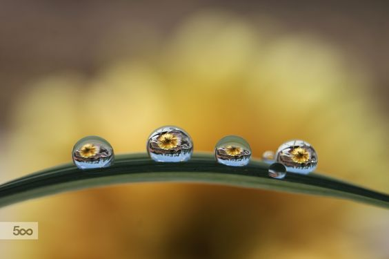 Photograph Yellow rhapsody by Sonja Cvorovic on 500px