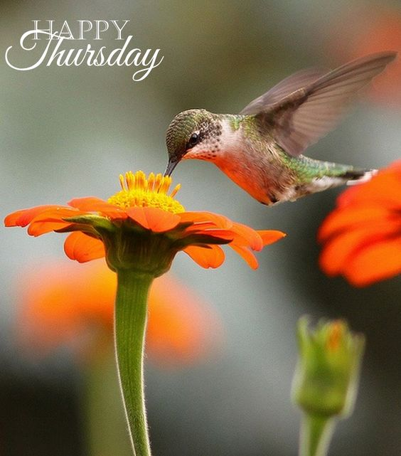 Happy Thursday! ❤ï¸Â