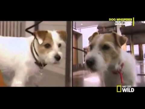 the dog whisperer full episodes - YouTube