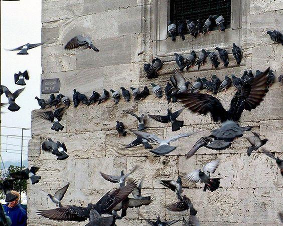 071020033f Istanbul - Yeni Cami | Flickr - Photo Sharing!