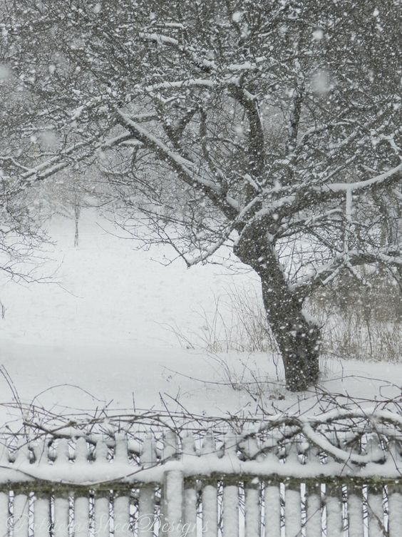 Large Nemo Blizzard photograph apple tree par PatriciaSheaDesigns