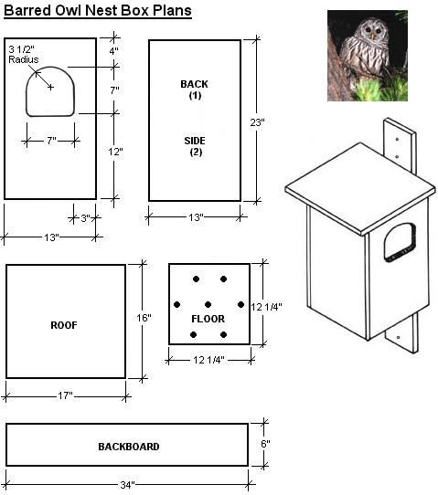 Free Easy Bird House Plan Screech Owl Bird House Garden