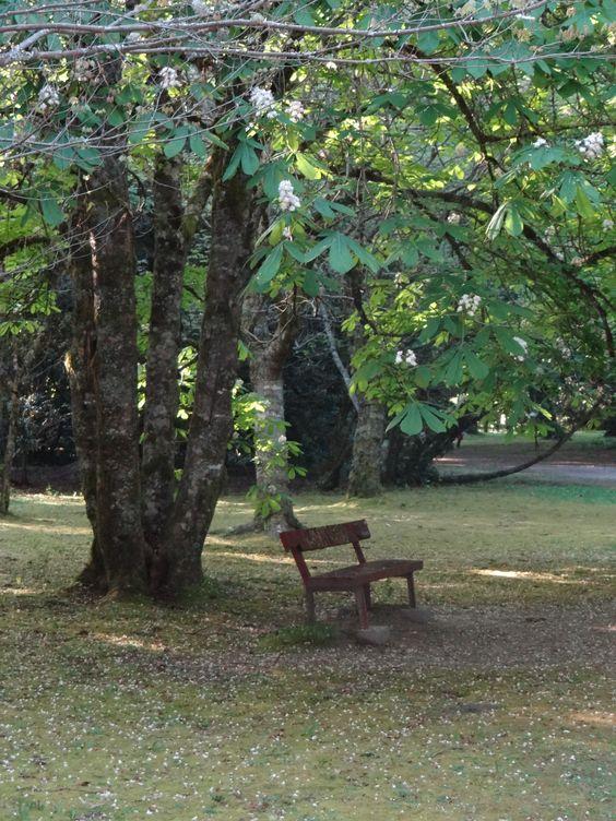 Jardín Botánico Valdivia