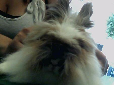 Fisio Damia #ConejoEnano #veterinario www.veterinarioexoticos.com