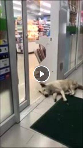 cachorro fica na porta e ninguem passa