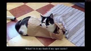chat drole - YouTube