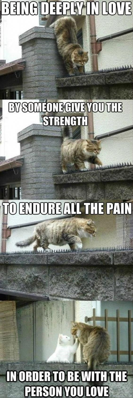 Here Is Your Daily Treat Of Cat Memes #catsandkittens