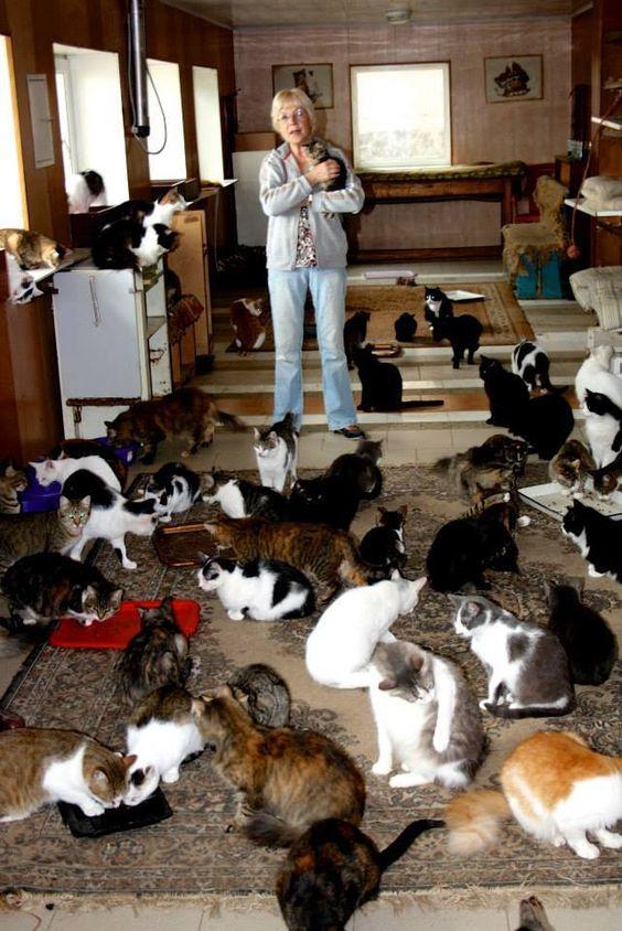 AStuce soigner sont chat naturelle F10c5ad16a0b60e71698f86122c47d92