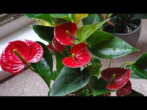 Pin On You Tube Hindi Plant Care Tips
