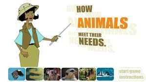 How animals meet their needs?