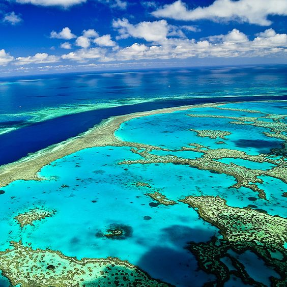 The Great Barrier Reef, Australia - one of the Seven Natural Wonders of the World One of the stops on our Big trip http://www.tipsfortravellers.com/bigtrip2014: