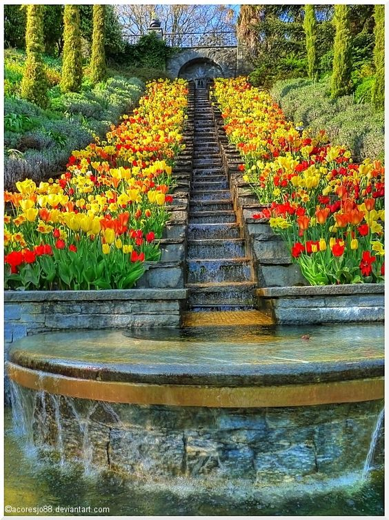 Mainau flowers, bodensee germany