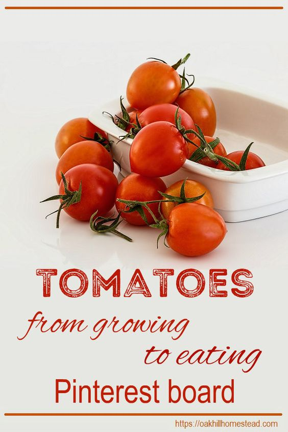 https://www.pinterest.com/oakhh/tomatoes-from-growing-to-eating/