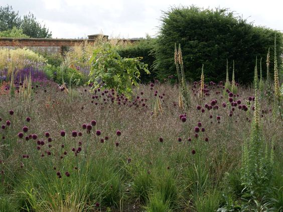 the ethereal qualities of grasses can give a planting