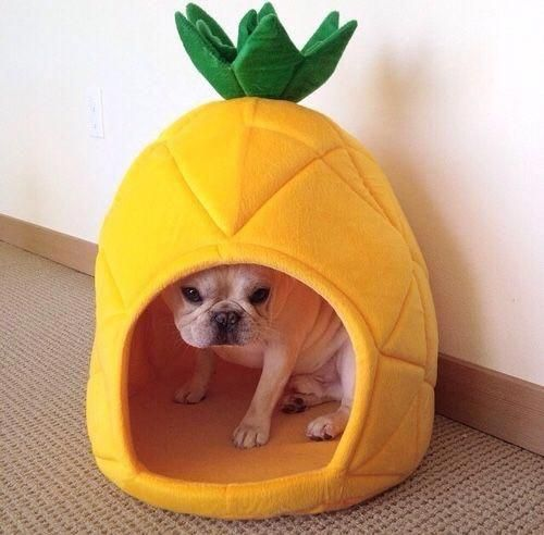 Pineapple Dog House French Bulldogs Dogs Puppies Dogs Cute Dogs