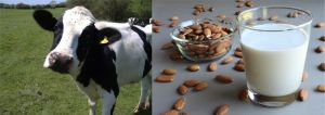 Sustituye la leche de Vaca por leche de almendra