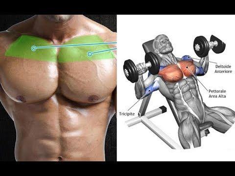 New Video By مهووس عضلات كمال الاجسام On Youtube 7 تمارين لابراز عضلات الصدر العلوية وخط الوسط Chest تمارين عضلة ا Muscular Strength Exercise Fitness Training