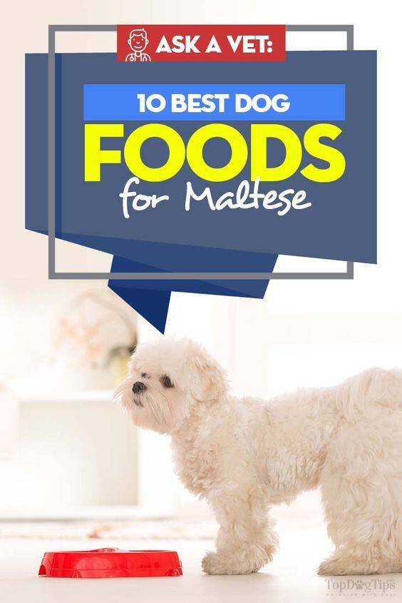10 Vet Recommended Foods For Maltese Best Dog Food Dog Food Recipes Maltese Dogs