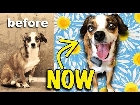 3 Yr Old Homeless Dog Wags Her Tail First Time Amazing Reaction Youtube Homeless Dogs Dogs Overweight Dog