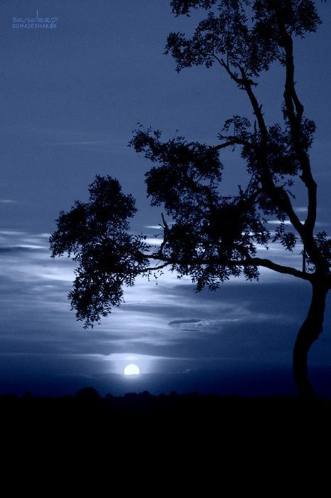 Winter Moonshine -