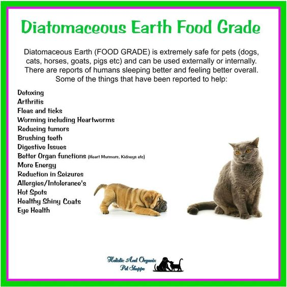 Diatomaceous Earth Food Grade Benefits For Cats