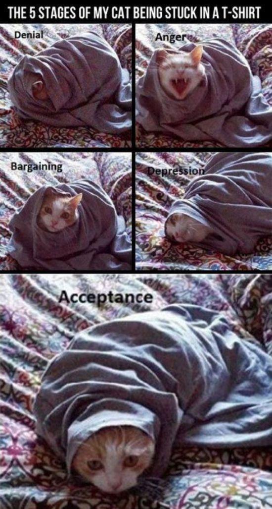 Lol icats