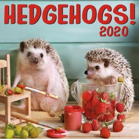 Hedgehogs 2020 Calendar. Hedgehogs are America's hot new pets. Their lovely little faces and amusing antics make them lovable pint-sized companions. The images in this fun 12-month calendar capture these little critters in their busiest moments.