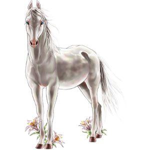 Weißer Stern, Pferd Paint Horse Dunkelfuchs mit Tovero-Sche - Howrse