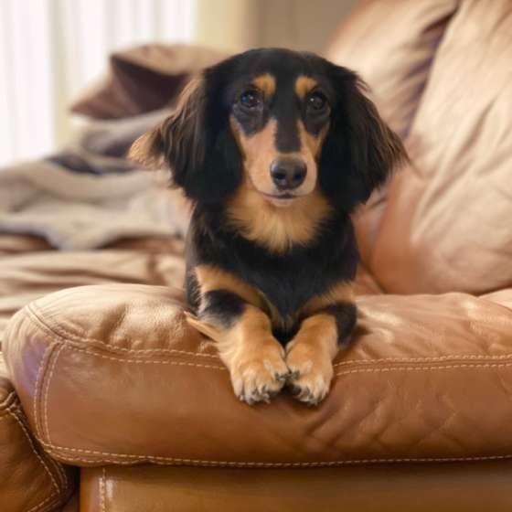 引越しは愛犬にストレス 新生活の前に準備したいこと いぬのきもちweb Magazine いぬ 動物 犬