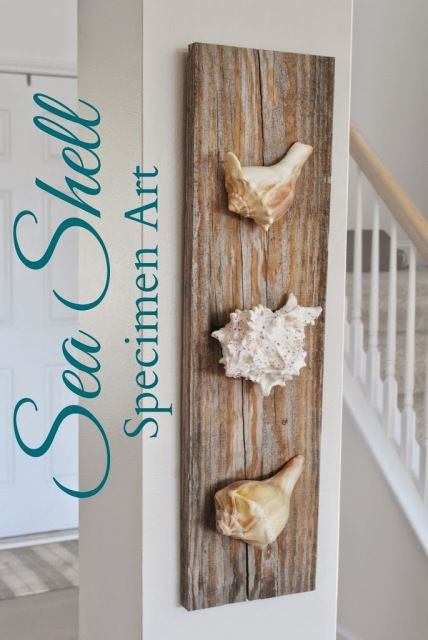 Easy beach house diy sea shell specimen art diy summer crafts pinterest sea shells - Diy projects with seashells personalize your home ...
