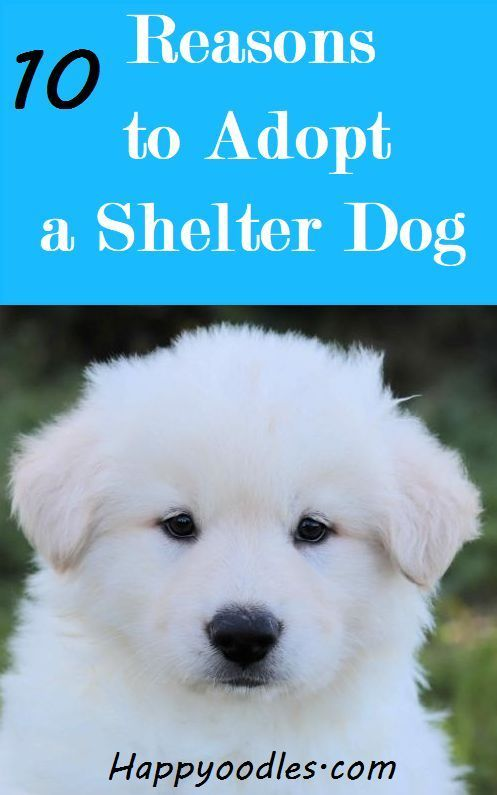 10 Reasons To Adopt A Shelter Dog Shelter Dogs Dogs Adoption